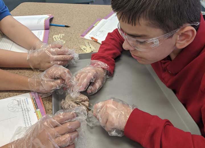 Green Bay AJA Students Dissect Sheep Brain