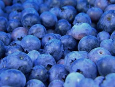 Michigan Blueberries Now Available at The LightHouse Thrift Store